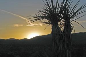 Sunset over Joshua Tree National Park