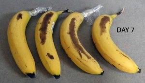 banana experiment