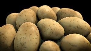 potato-1463423_640
