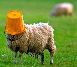 sheep.jpg?w=251&h=218
